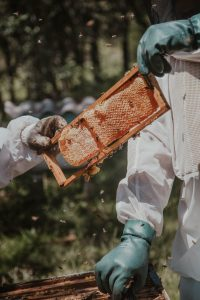bee keeper passing bee hive frame to another bee keeper